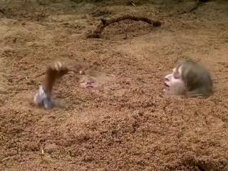 Girls quicksand